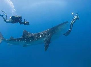关于潜水的5条奇葩谣言!