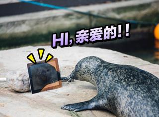 两只被残忍分隔异地的情侣海豹,竟然通过iPad视频来联络感情!