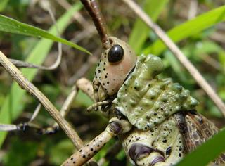 为什么有些昆虫会杀死它们的母亲