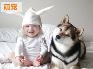 萌宠丨一只柴犬和一个小正太的幸福生活