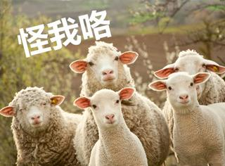 2185只绵羊集体放屁触发烟雾警报,飞机紧急迫降!
