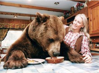 一对老夫妇竟把一头棕熊当儿子养着,然后不可思议的事情发生了...