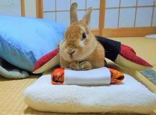 萌哭!小兔子冬天也有被窝睡啦