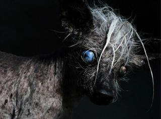 """萌狗见多了,可你见过世界上最""""丑""""的狗狗么?"""