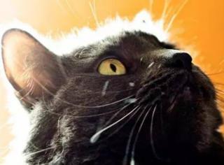 一只猫的表面积有多大?大概等于一张乒乓桌