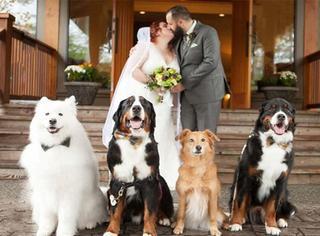 这对新人的婚礼,伴娘竟是4只狗?!