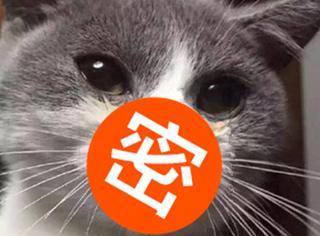 网友晒出自家猫咪被蜂蛰的照片,笑的我脸都裂了...