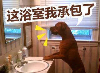 萌宠 | 当浴室被它们霸占之后...肚子都要笑炸了!