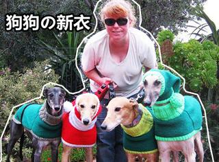 英国一位阿姨专给猎犬做衣服,而且一做就是8年!