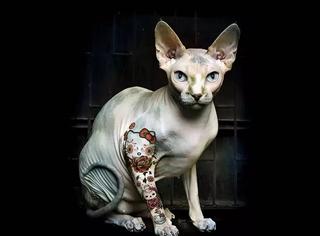 给这只三万块的丑猫纹了身,结果酷得大家都想收养它
