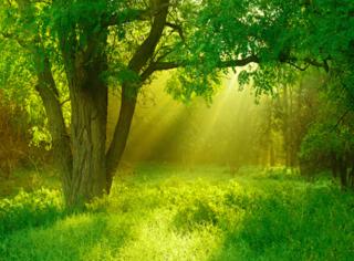 穹顶之下 森林之中:存在电脑里不舍得腾内存的绿色电影