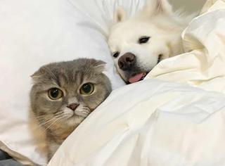 萌宠 | 可别说自己是单身狗了,我们可能猫狗不如…
