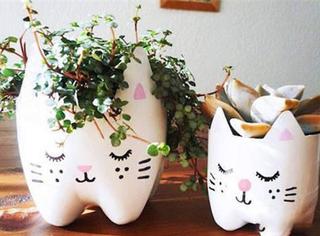早知道塑料瓶养花种菜这么爽,还买什么花盆呢!