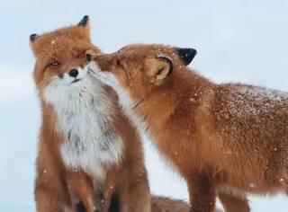 为什么人人都爱狐狸精?