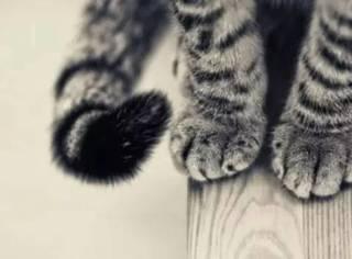 爪不贱,何以称猫?