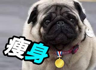 汪星人甩34斤肉拿瘦身大赛冠军