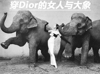 是谁让穿着Dior高定的女人,与大象一起跳舞