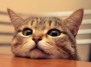 每只猫咪遇到好心人都会变成天使!