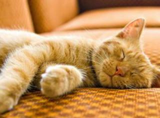 喵起床后:我是谁,我在哪,我怎么变成了一只猫?
