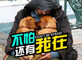 萌宠 |暖哭,每个流浪汉都有一条陪伴终身的狗狗