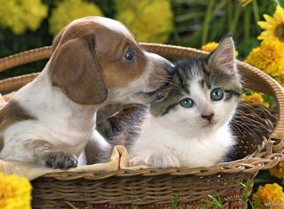狗,你家缺猫吗?