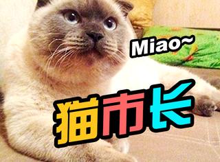 俄罗斯小城选市长,一只猫获得了90%的投票!