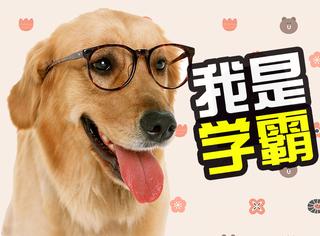 萌宠 | 搞学术玩音乐,武大狗狗成学霸!