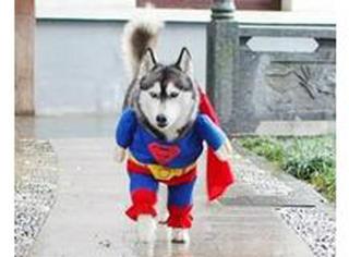 你见过会发朋友圈的狗狗吗?