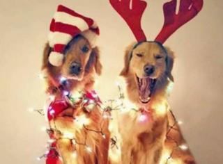 千万别跟单身狗过圣诞!