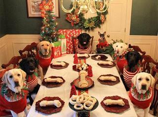 穿红衣,吃大餐,汪星人也要过圣诞!