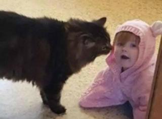 家里的娃每天都和喵玩在一起