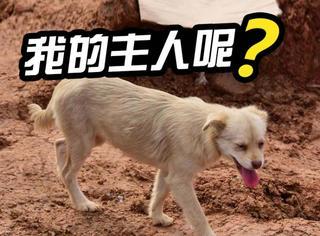 深圳滑坡三天了,它一点东西都没吃,只为寻找失踪的主人!