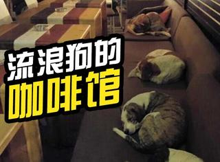 这个咖啡馆打烊不关门,让流浪狗自由进出睡沙发