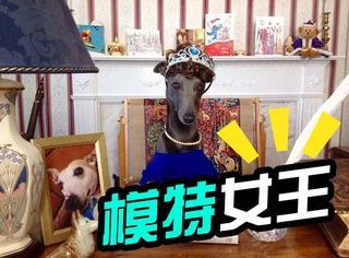萌宠|圣诞节,英国职业狗狗也拍起了大片