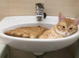 新周猫|敢不敢来做这套真·猫奴测试题!