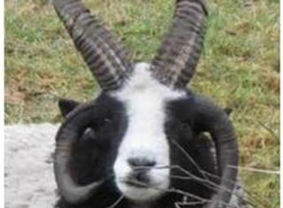 【奇葩】18种杂交神奇动物,知道5种就很了不起