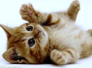 一只猫测出你的内心世界!