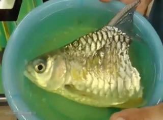 一条只有半个身子的鱼被收养,还活了6个月