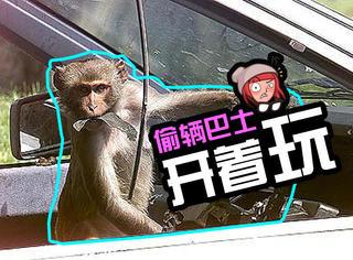 趁司机午睡,印度小猴偷开巴士连撞两车