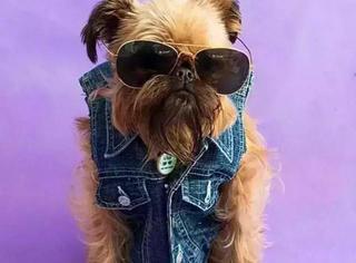 看看狗狗的衣服