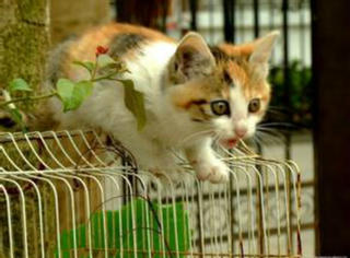 白猫平时老逗一只小猫玩,一天突然地震