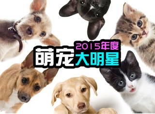 萌宠 | 2015年度萌宠明星大盘点!