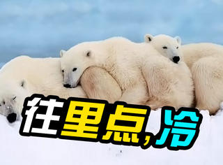 萌宠|看济南降温时,动物园内各种取暖方式!
