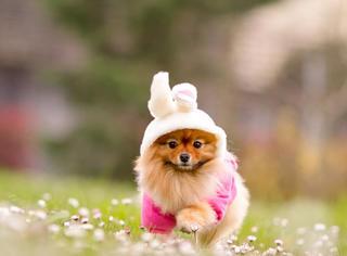 【奇葩】最近很火的魔性问题:狗该怎么穿裤子?