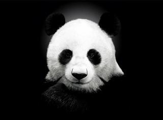 20个关于熊猫的有趣事实