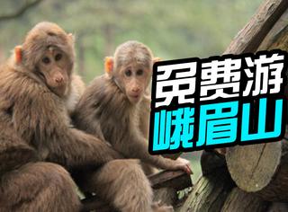 2016新年福利!峨眉山将为全球属猴的人免票!