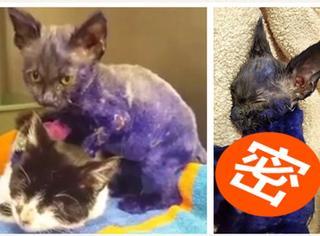 紫色小猫每天为失明同伴做按摩,但它背后的故事却会让你唏嘘...
