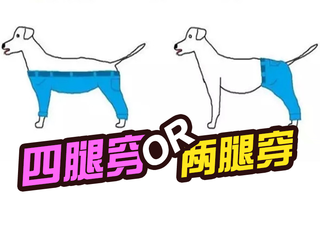 疯传网络的热议问题:狗狗到底穿两腿裤还是四腿裤?
