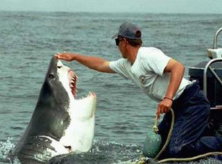 萌宠 | 好心渔夫放生大白鲨,鲨鱼表达感激的举动令人震惊!