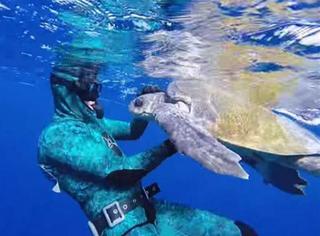 萌宠 | 被困海龟遇好心人解救,原本游走的它又突然游了回来!